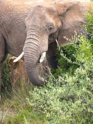 Pilanesberg, South Africa, February 2015
